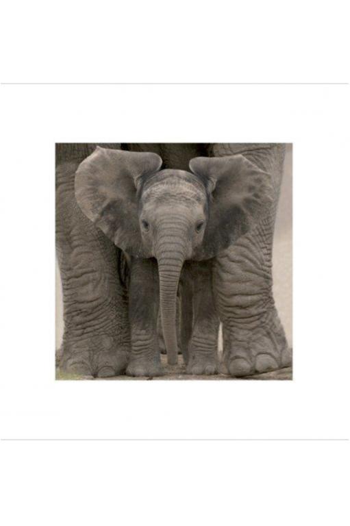 Elephant Baby - Big Ears