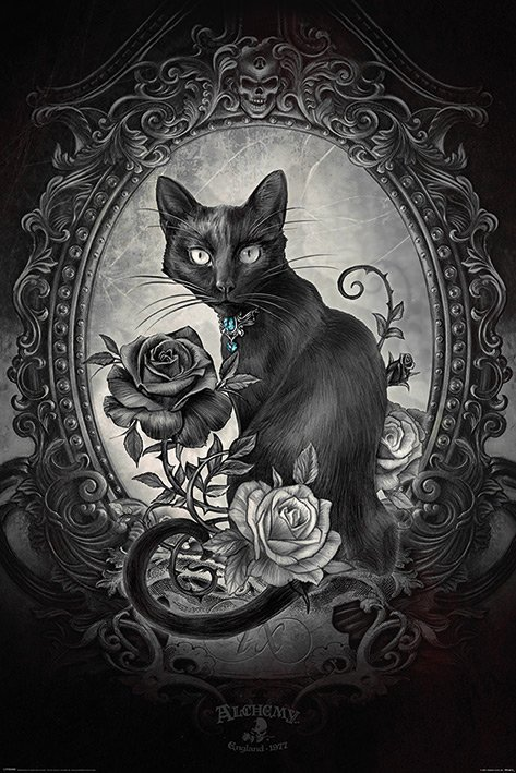 Alchemy - Paracelcus - Cat - Katt