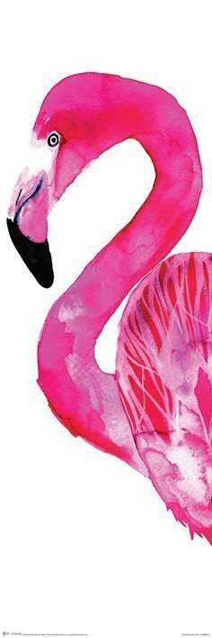 Sofie Rolfsdotter - Flamingo