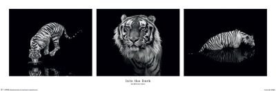 Marina Cano - Into the Dark - Tiger