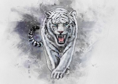 Pergament - White Tiger - Vit tiger