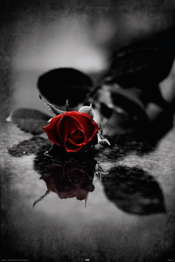 Red Gothic Rose