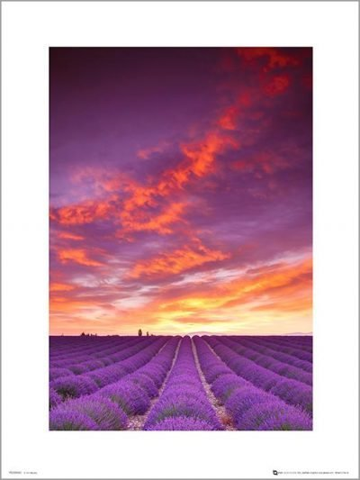 Exklusivt Art Print - Tom Mackie - Purple fields and sky