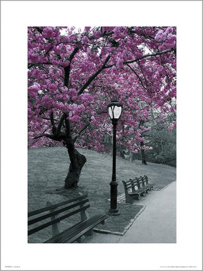 Exklusivt Art Print - New York - Central park - Blossom