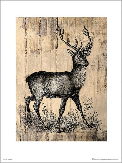 Exklusivt Art Print - Deer Sketch