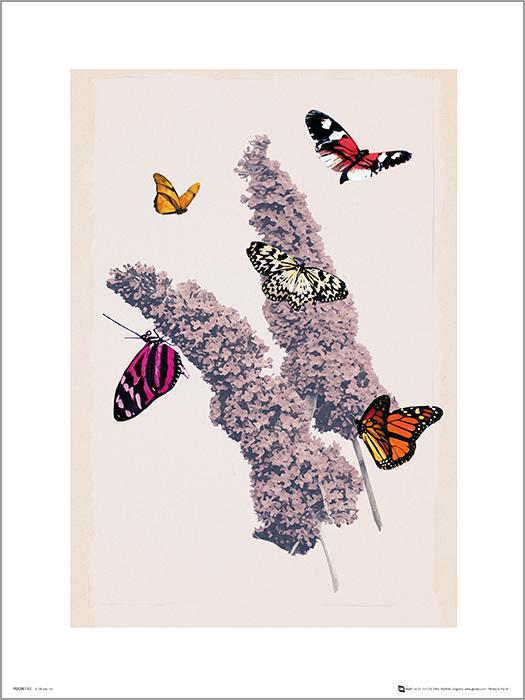 Exklusivt Art Print - Butterflies - Fjärilar
