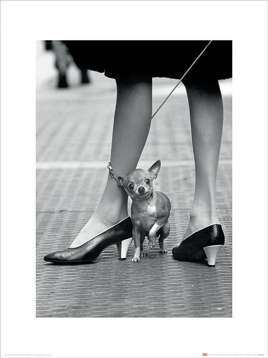 Time Life - Chihuahua