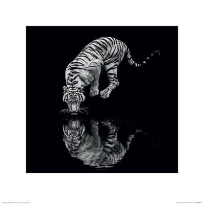 Marina Cano - Tiger (Into the Dark I)