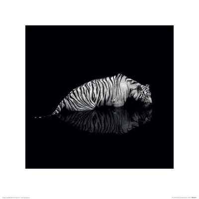 Marina Cano - Tiger (Into the Dark II)