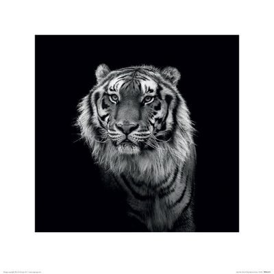 Marina Cano - Tiger (Into the Dark III)