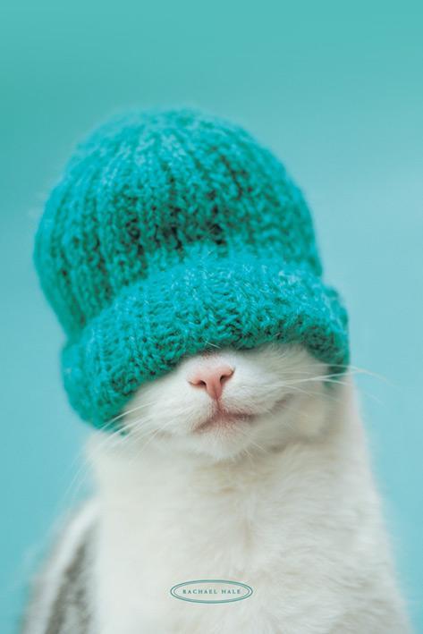 Rachel Hale - Cat in hat