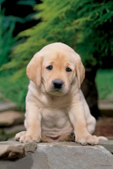 Keith Kimberlain - Sad Puppy
