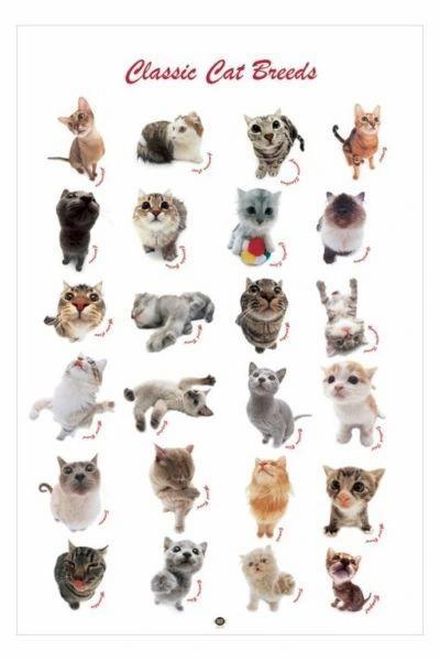 Classic cat breeds