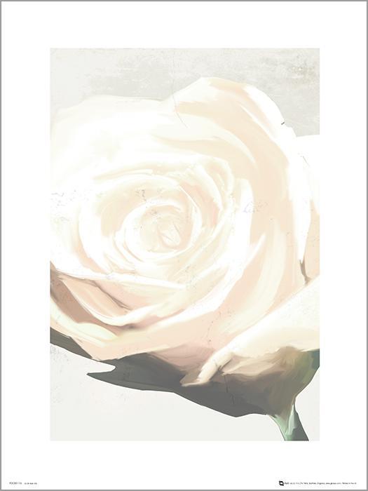 Exklusivt Art Print - White Rose - Vit ros