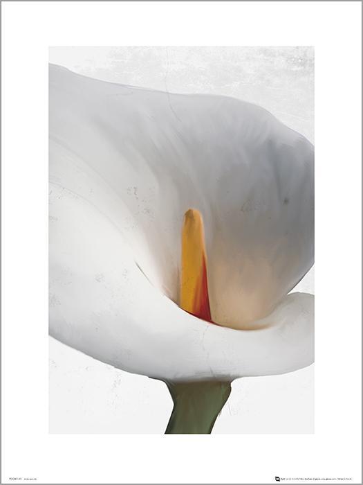 Exklusivt Art Print - Floral Calla