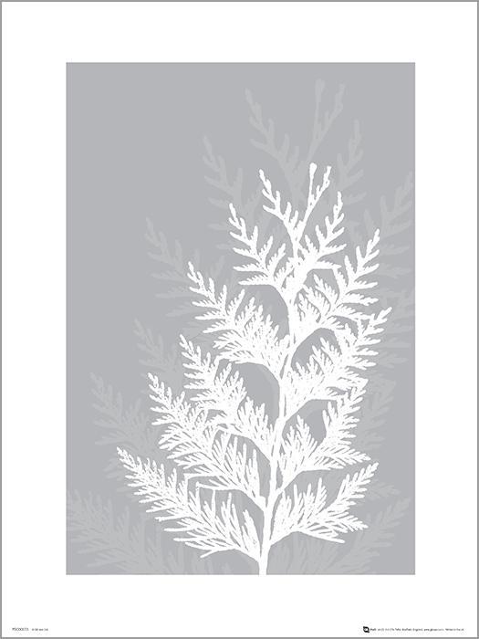 Exklusivt Art Print - Pressed leaf gray - Pressat blad, grå