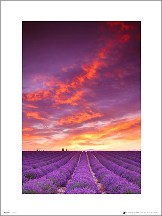 Exklusivt Art Print - Tom Mackie - Purple fields and sky