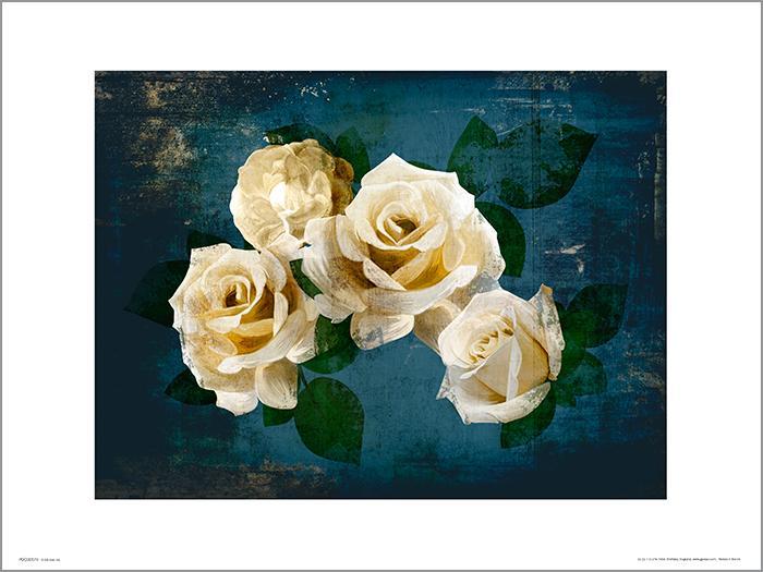 Exklusivt Art Print - Roses Midnight - Vita rosor i natten