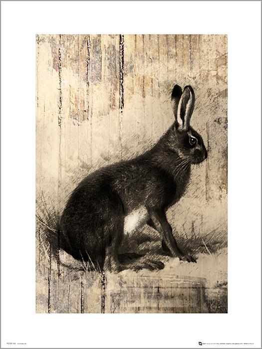 Exklusivt Art Print - Hare Sketch
