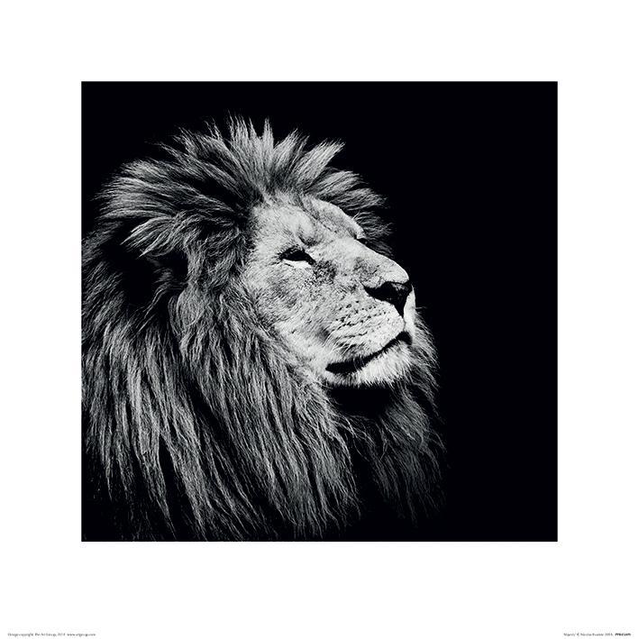 Nicolas Evariste - Majesty - Lion - Lejon