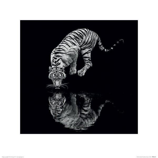 Marina Cano - Tiger (Into the Dark I)