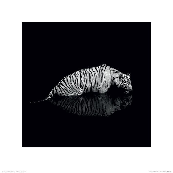 Marina Cano - Tiger (Into the Dark II)