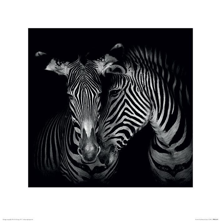 Marina Cano - Zebra (Secrets)