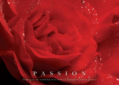 Passion - Red Rose - Röd Ros