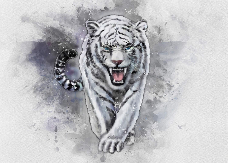 A3 Print - White Tiger - Vit tiger