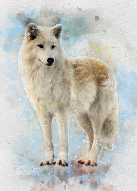 A3 Print - White Wolf - Vit Varg