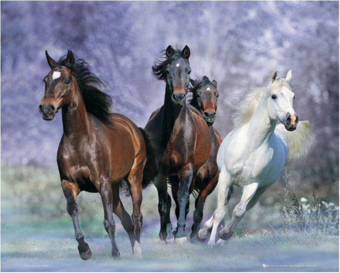Poster - Bob Langrish - Running, hästar