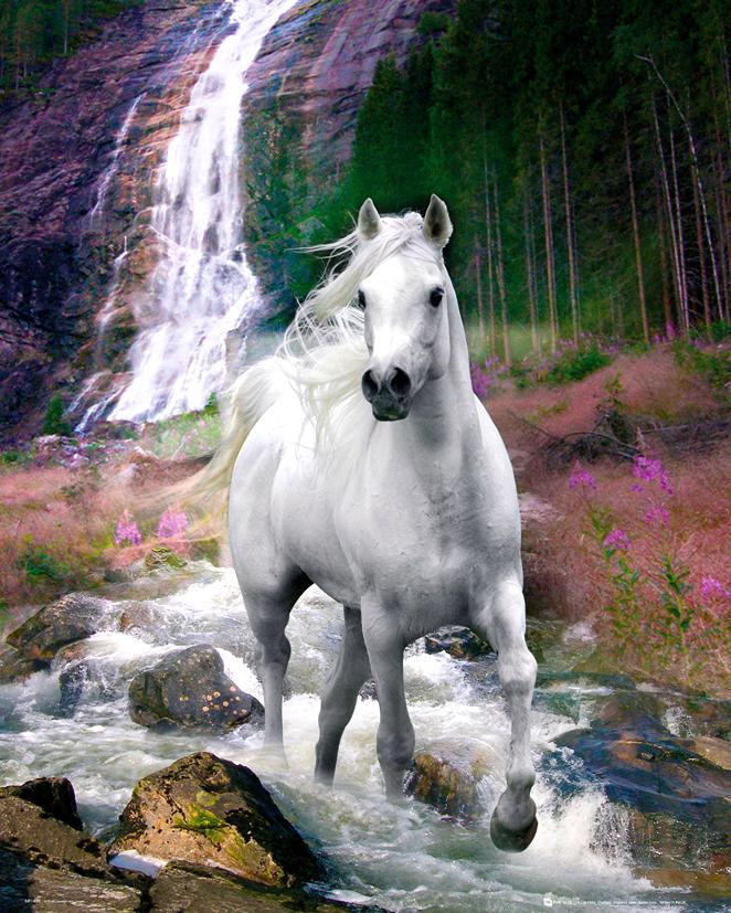 Bob Langrish - Waterfall and Horse