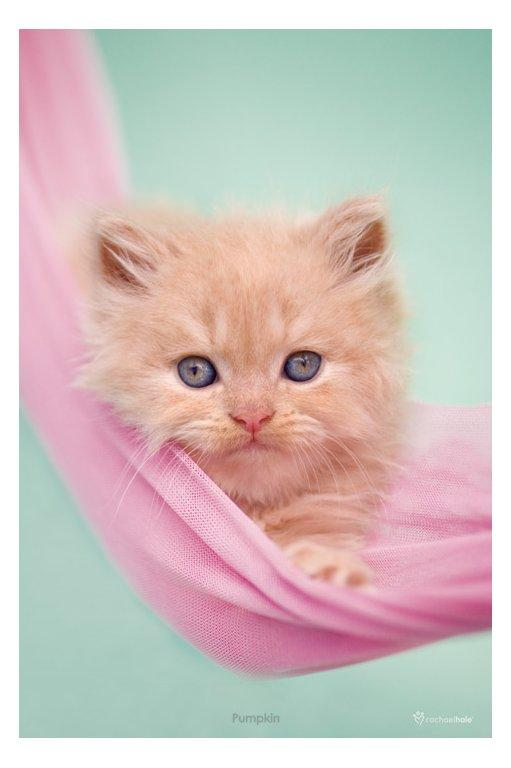 Cat -Pumpkin