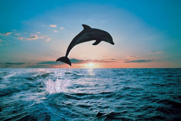 Dolphin Leap of freedom